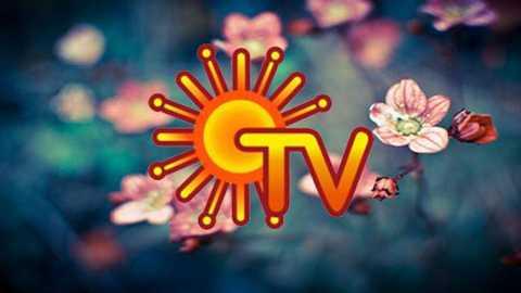 sun tv share graph growth