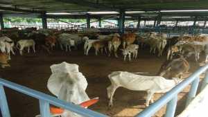 Agriculture success story in Marathi Gokulam Gaurakshan Sanstha