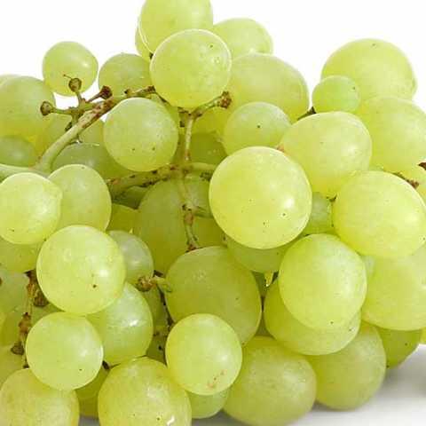 31 lakh discipleship grape farmers