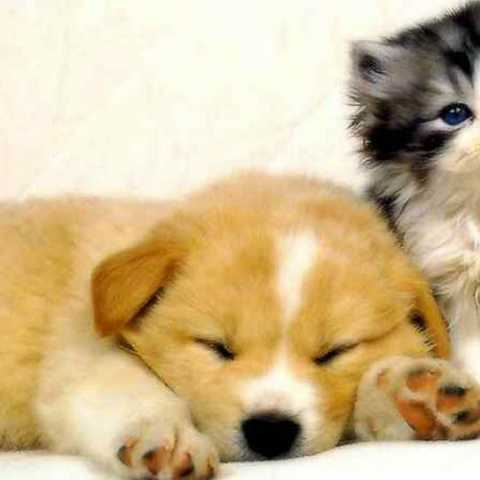 Dog five times Loving then cat
