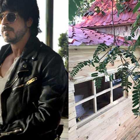 Shah Rukh Khan's son, Tree House